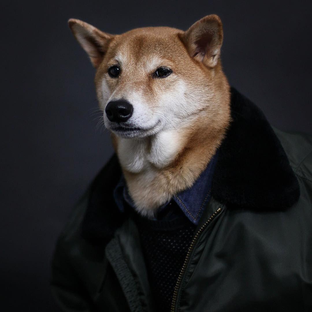 柴犬ボディ
