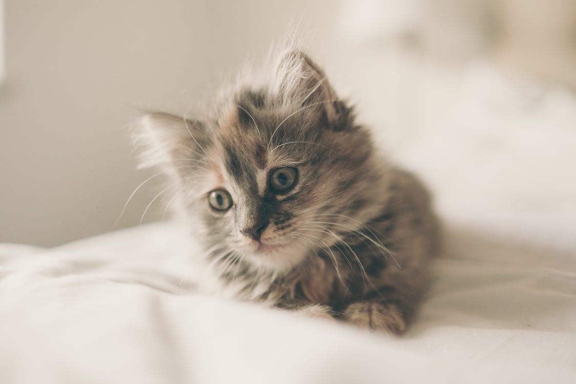 猫の写真を楽しもう!猫のインスタグラム、ニャンスタグラムって知ってる?