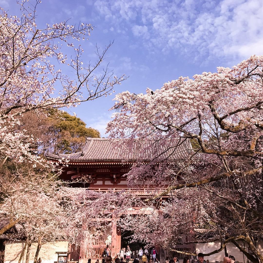 京都 伏見