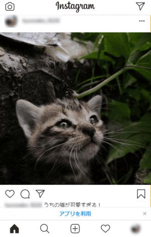 Instagram(インスタグラム)「投稿した後」の画像